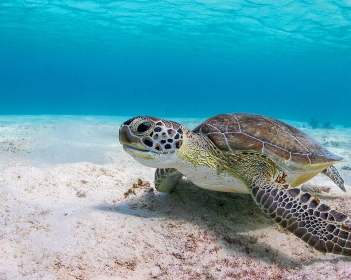 Tips For Investing In Pet Dog Turtles